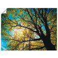 artland artprint lentezon door boomkruin in vele afmetingen  productsoorten - artprint van aluminium - artprint voor buiten, artprint op linnen, poster, muursticker - wandfolie ook geschikt voor de badkamer (1 stuk) groen