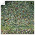 artland artprint appelboom i. 1912 in vele afmetingen  productsoorten - artprint van aluminium - artprint voor buiten, artprint op linnen, poster, muursticker - wandfolie ook geschikt voor de badkamer (1 stuk) groen