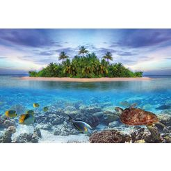 bmd fotobehang »marine life maldives« multicolor