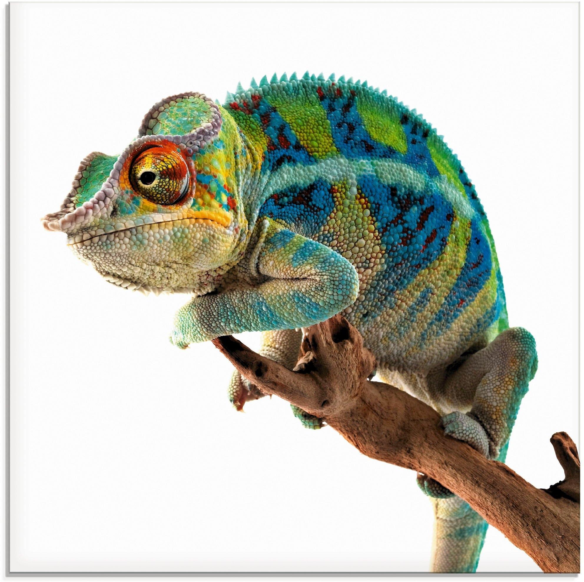 Op zoek naar een Artland print op glas Ambanja panter kameleon (1 stuk)? Koop online bij OTTO