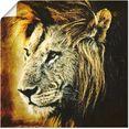 artland artprint leeuw in vele afmetingen  productsoorten -artprint op linnen, poster, muursticker - wandfolie ook geschikt voor de badkamer (1 stuk) bruin