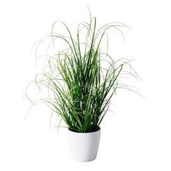 deco-plant groen