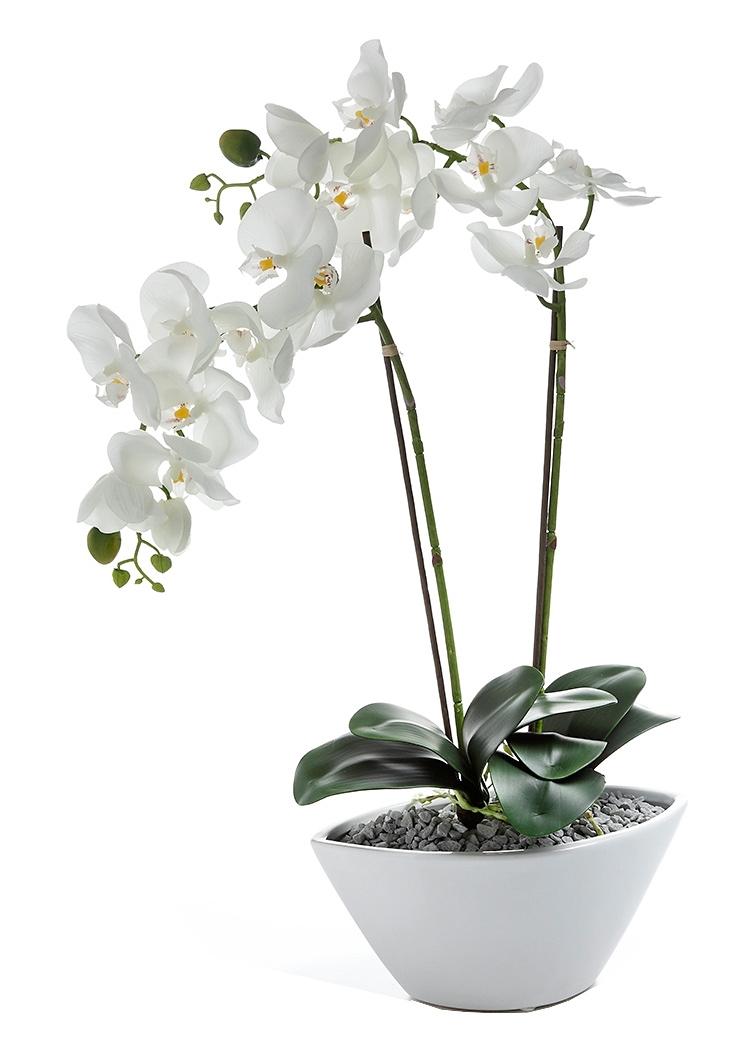 deco orchidee in schaal van keramiek online shop otto. Black Bedroom Furniture Sets. Home Design Ideas