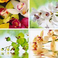 home affaire artprints op linnen »zee van orchideen«, 4x 30x30 cm multicolor
