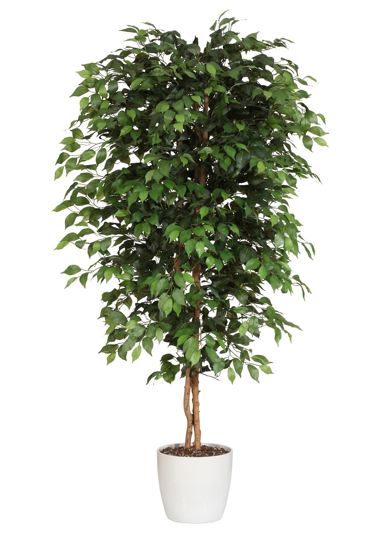 Creativ green kunstplant Ficus Benjamini (1 stuk) voordelig en veilig online kopen
