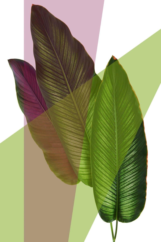 Op zoek naar een queence Artprint op acrylglas Bladeren? Koop online bij OTTO