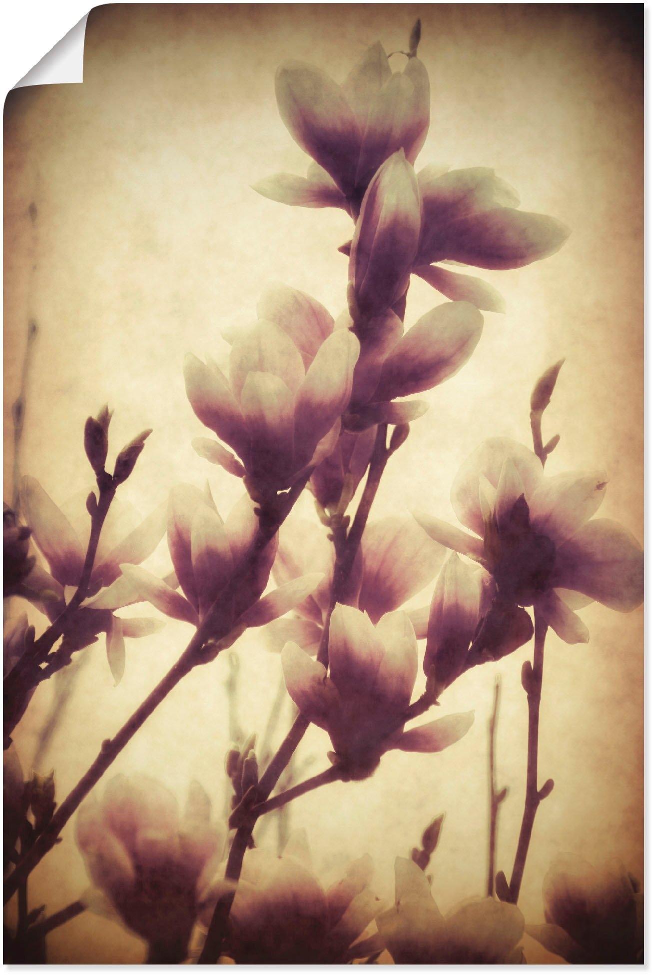 Artland artprint Magnolia I in vele afmetingen & productsoorten - artprint van aluminium / artprint voor buiten, artprint op linnen, poster, muursticker / wandfolie ook geschikt voor de badkamer (1 stuk) veilig op otto.nl kopen