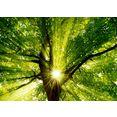 home affaire artprint op linnen smileus: zon straalt explosief door de boom 70-50 cm groen