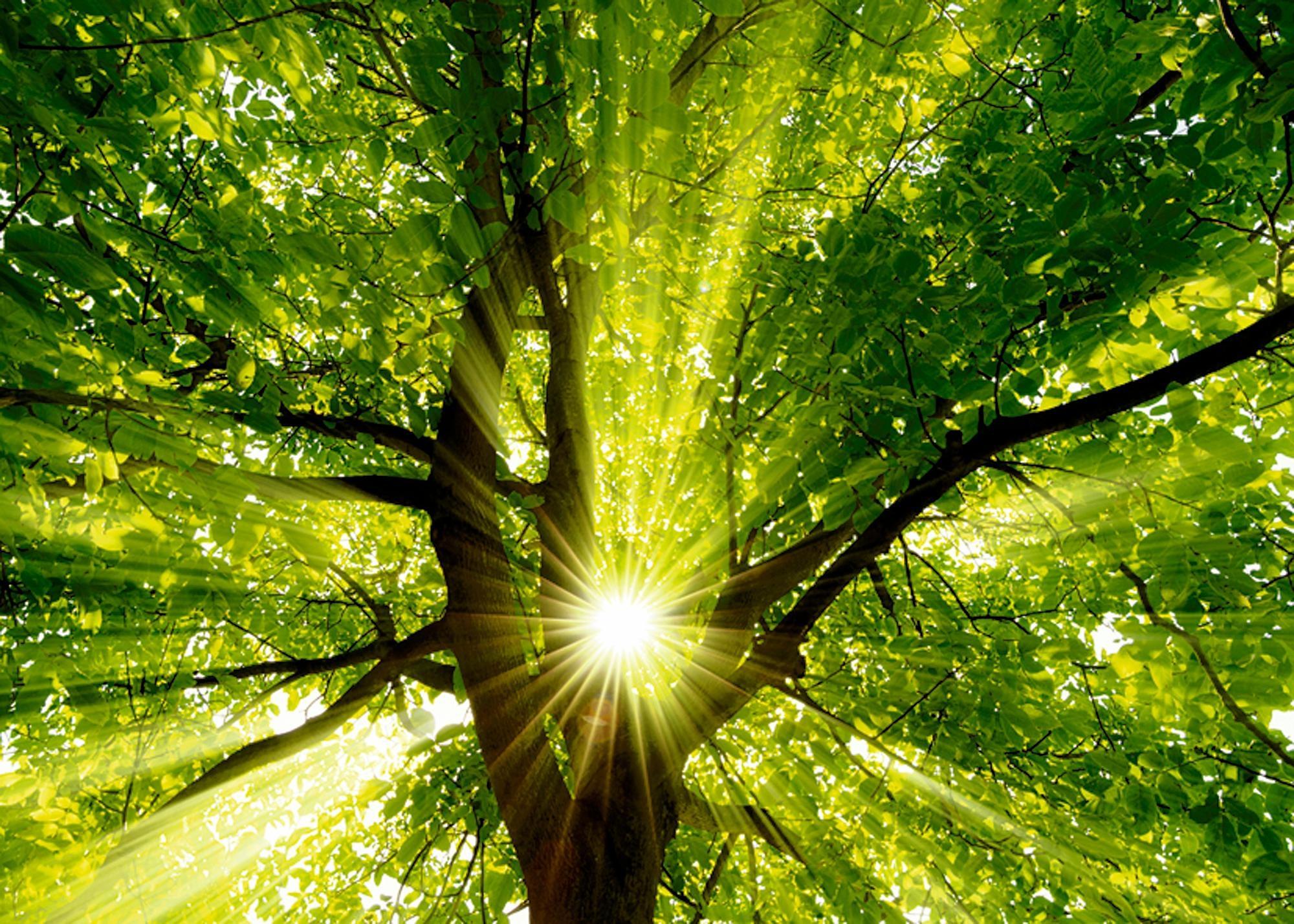 Home affaire artprint op linnen Smileus: zon straalt explosief door de boom 70/50 cm bij OTTO online kopen