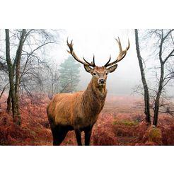 home affaire decoratief paneel edelhert in het bos 90-60 cm bruin