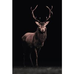 home affaire decoratief paneel »hert«, 60x90 cm zwart
