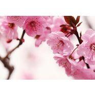 home affaire fotobehang peach blossom 350-260 cm roze