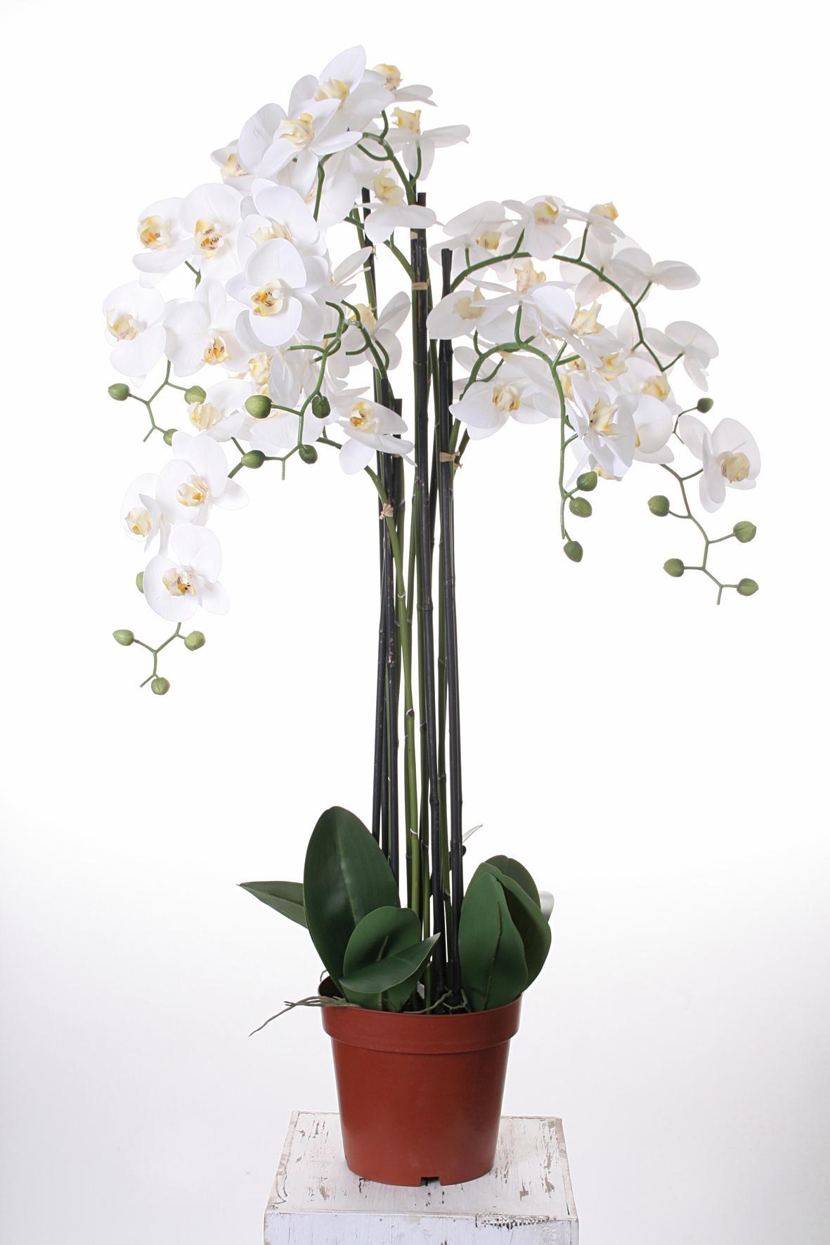 kunstorchidee »Orchidee XXL« goedkoop op otto.nl kopen
