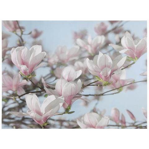 KOMAR fotobehang Magnolia, 368x254 cm