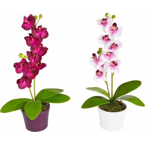 Kunst-orchidee in keramieken pot in set van 2