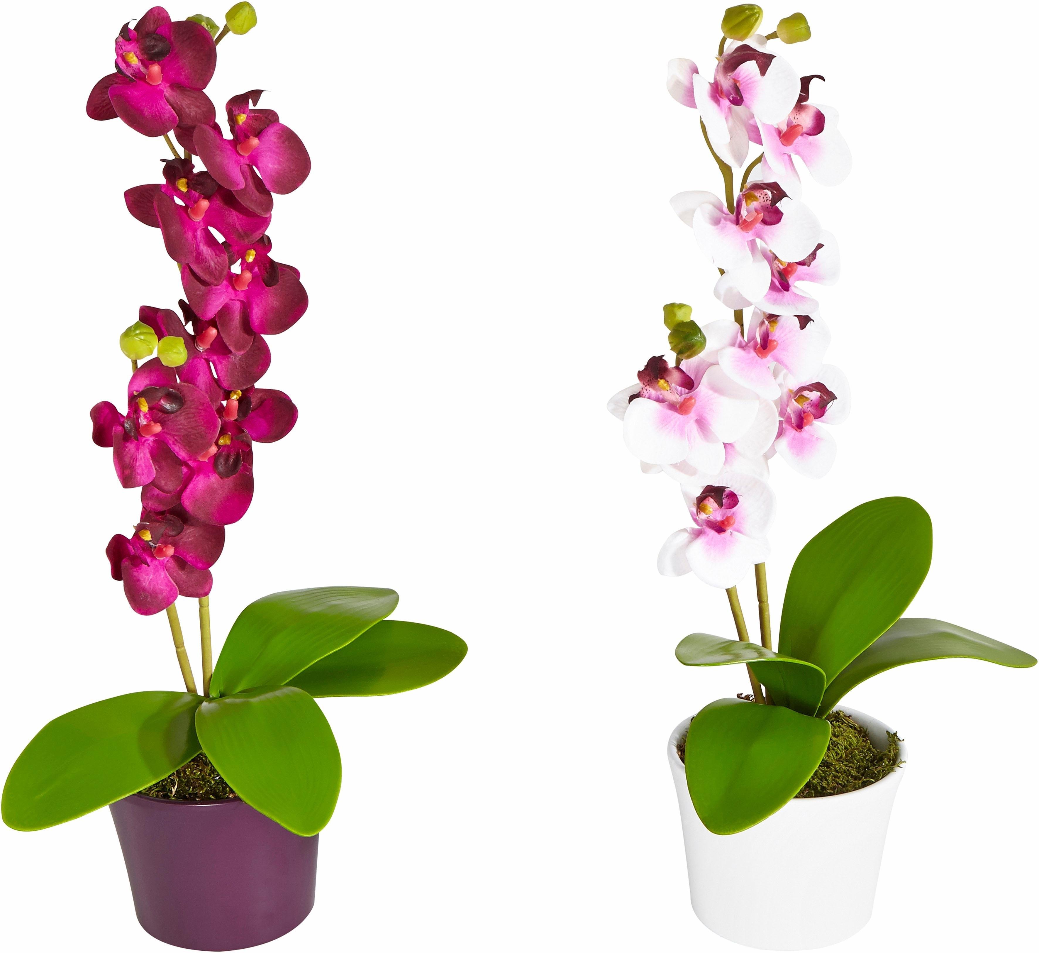 Afbeeldingen Bloemen Orchidee