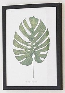 G&C wanddecoratie Blad gatenplant Deliciosa 30/40 cm, ingelijst nu online bestellen