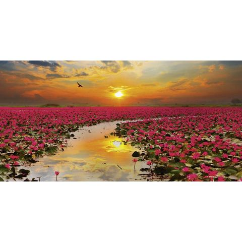 HOME AFFAIRE glazen artprint, S. Plumson: Zonneschijn en bloeiende lotusbloemen Thailand, 100x50