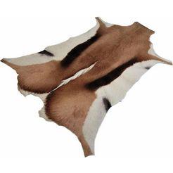 vloerkleed, »springbok-look«, living line, rechthoekig, hoogte 7 mm, machinaal getuft bruin