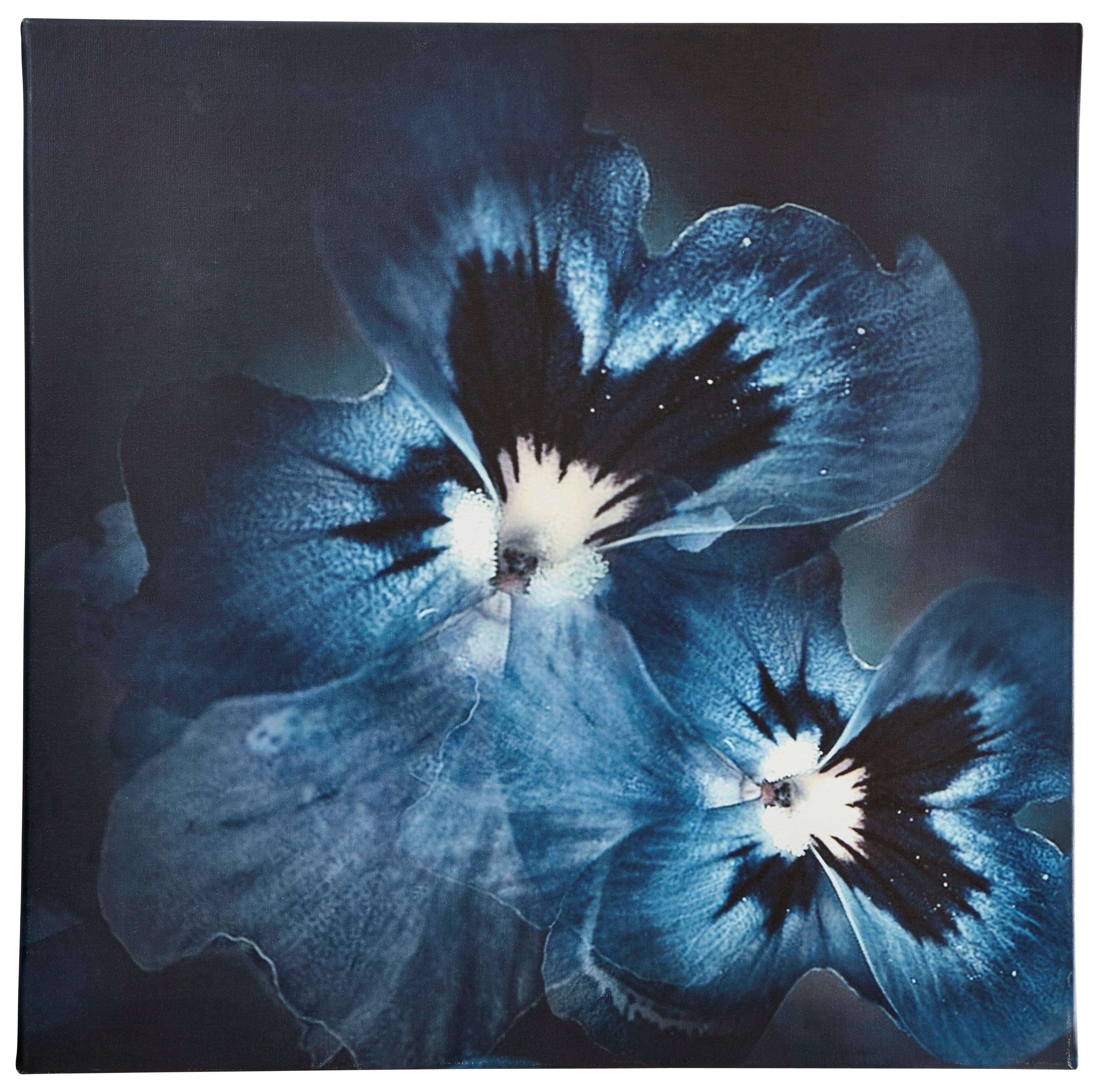 Guido Maria Kretschmer Home&Living artprint op linnen Viola Flower ingelijst, spieraam bij OTTO online kopen