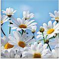 artland print op glas bloemen - margrieten (1 stuk) wit