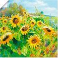artland artprint zomerweide met zonnebloemen in vele afmetingen  productsoorten - artprint van aluminium - artprint voor buiten, artprint op linnen, poster, muursticker - wandfolie ook geschikt voor de badkamer (1 stuk) geel
