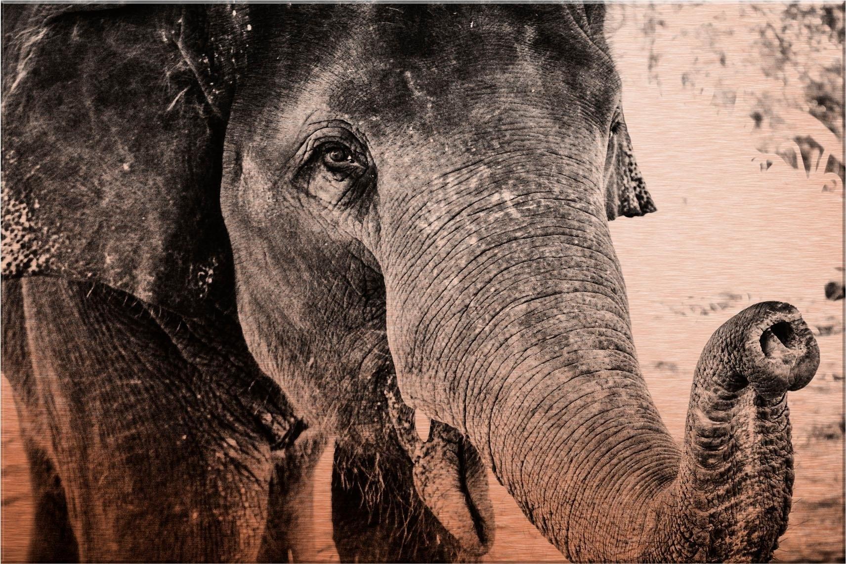 Wall-Art aluminium-dibondprint Indian Elephant 60/40 cm - verschillende betaalmethodes