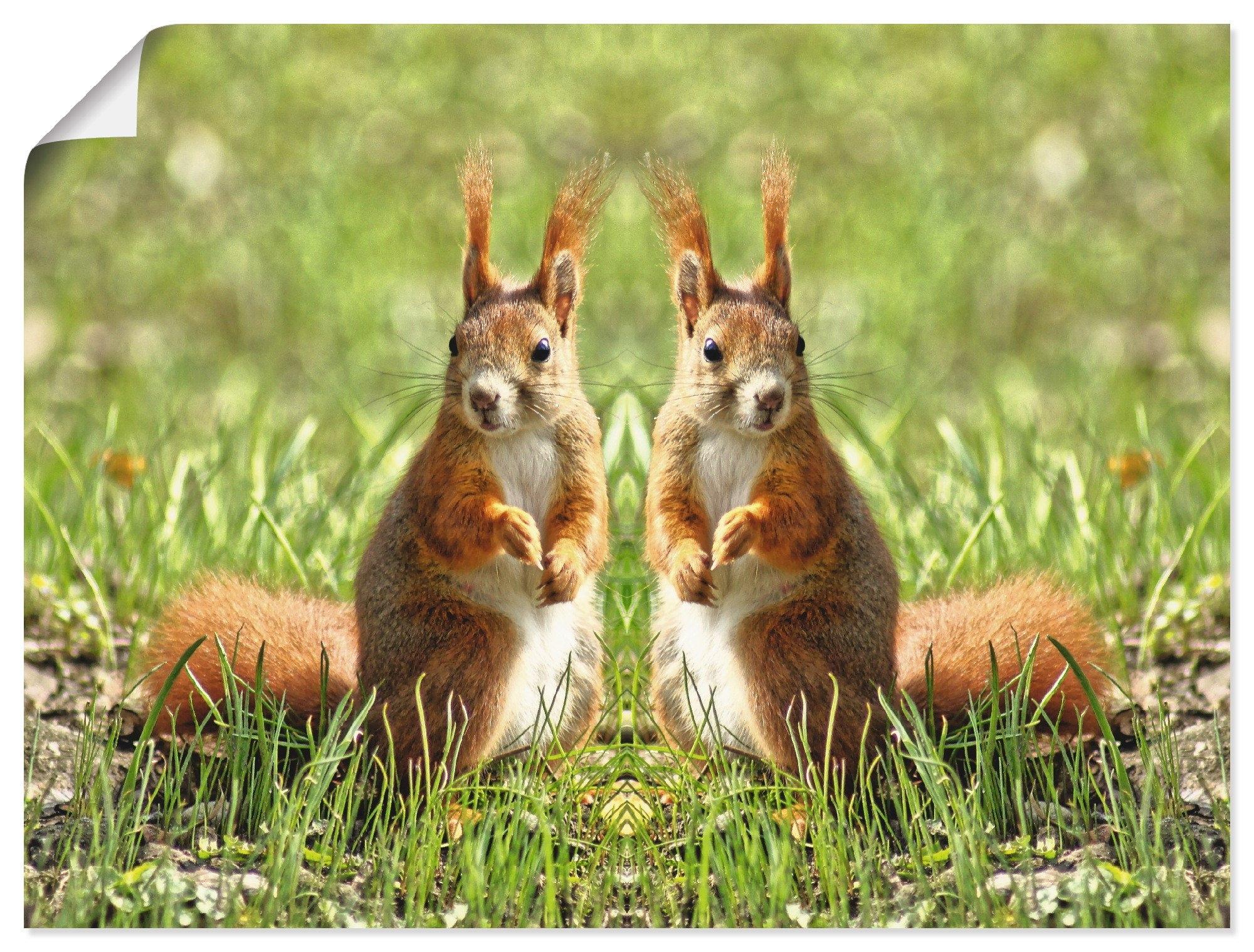 Artland artprint Rood eekhoorntje tweelingen in vele afmetingen & productsoorten - artprint van aluminium / artprint voor buiten, artprint op linnen, poster, muursticker / wandfolie ook geschikt voor de badkamer (1 stuk) online kopen op otto.nl