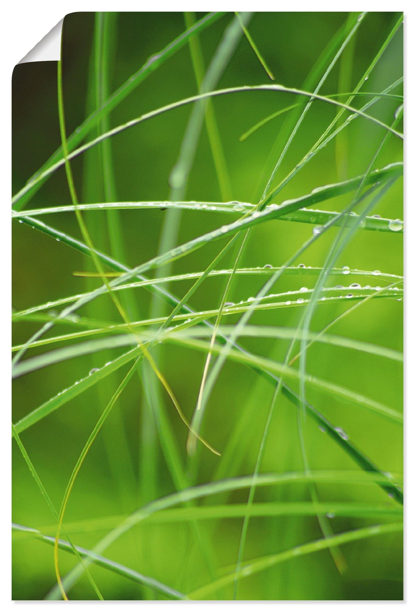 Artland Artprint Grassen in regenwoud met dauwdruppel in vele afmetingen & productsoorten - artprint van aluminium / artprint voor buiten, artprint op linnen, poster, muursticker / wandfolie ook geschikt voor de badkamer (1 stuk) veilig op otto.nl kopen