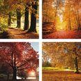 home affaire artprint op linnen herfstlandschap 4x 30-30 cm, op bord (set) bruin