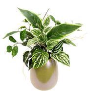 i.ge.a. kunstplant mixed bos hosta's in vaas (1 stuk) groen