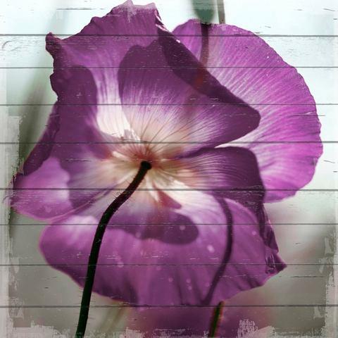Artprint op hout paarse bloem, 40x40 cm echt hout