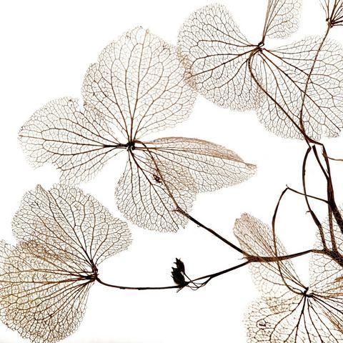 queence artprint op hout Pflanzen Adern, 40x40 cm Echtholz
