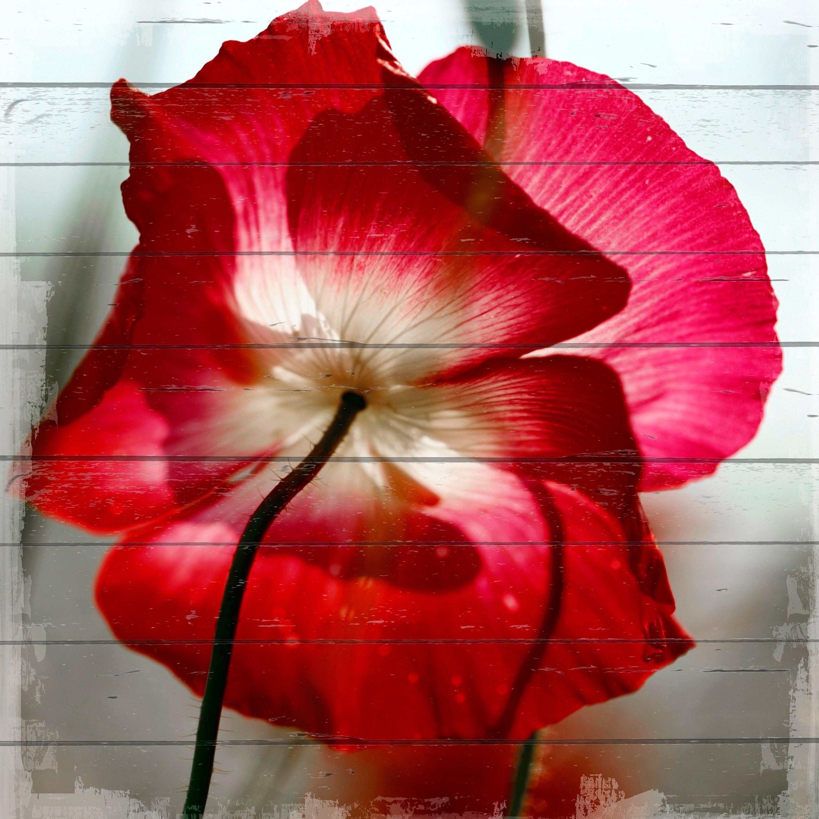 Queence Artprint op hout »roze bloem«, 40x40 cm echt hout nu online kopen bij OTTO