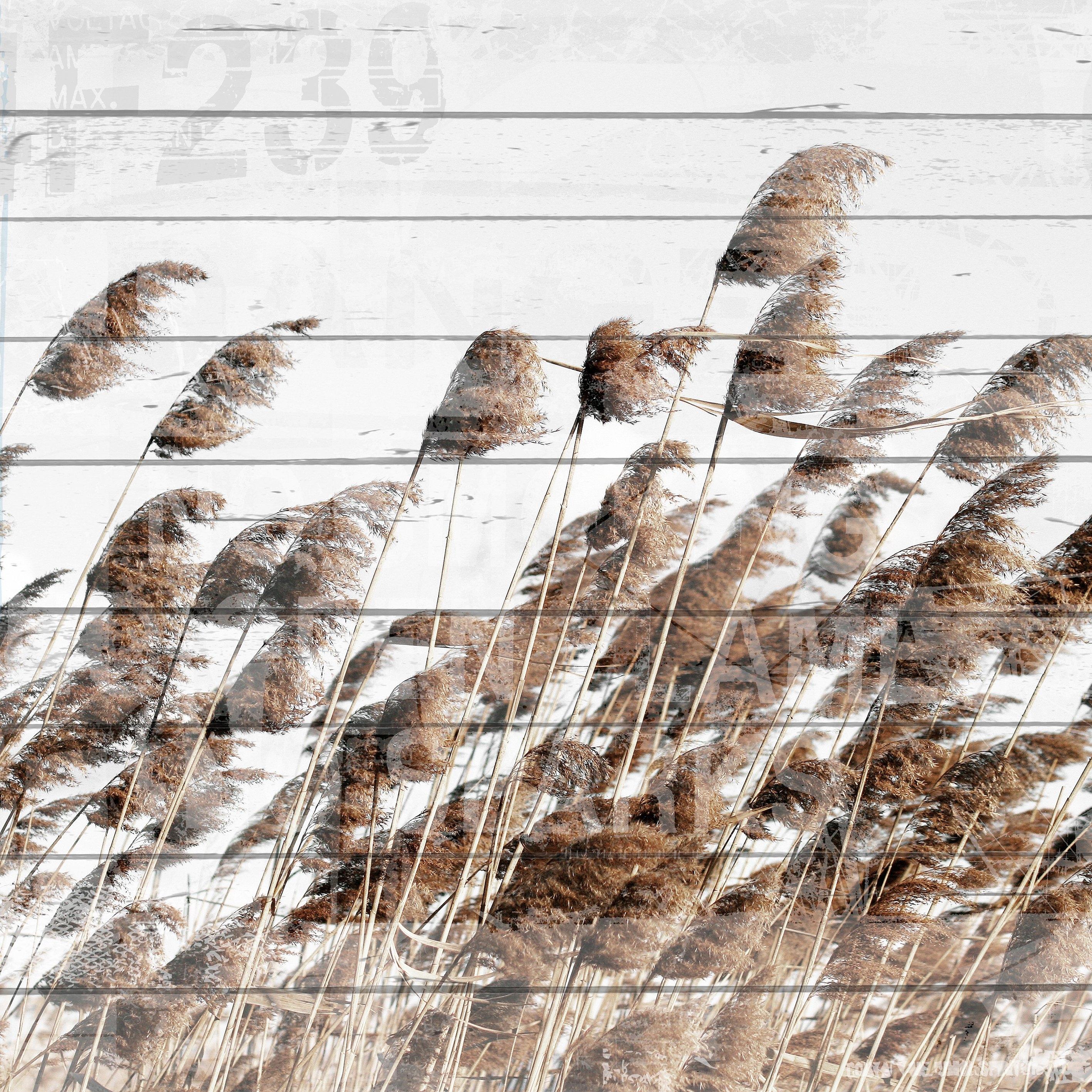 Queence artprint op hout »Schilf«, 40x40 cm Echtholz nu online bestellen