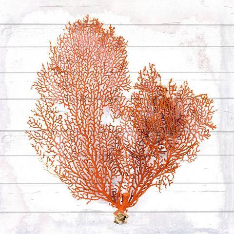 Artprint op hout Orange Koralle, 90 x 90 cm, zwart, kwart-circulaire douche