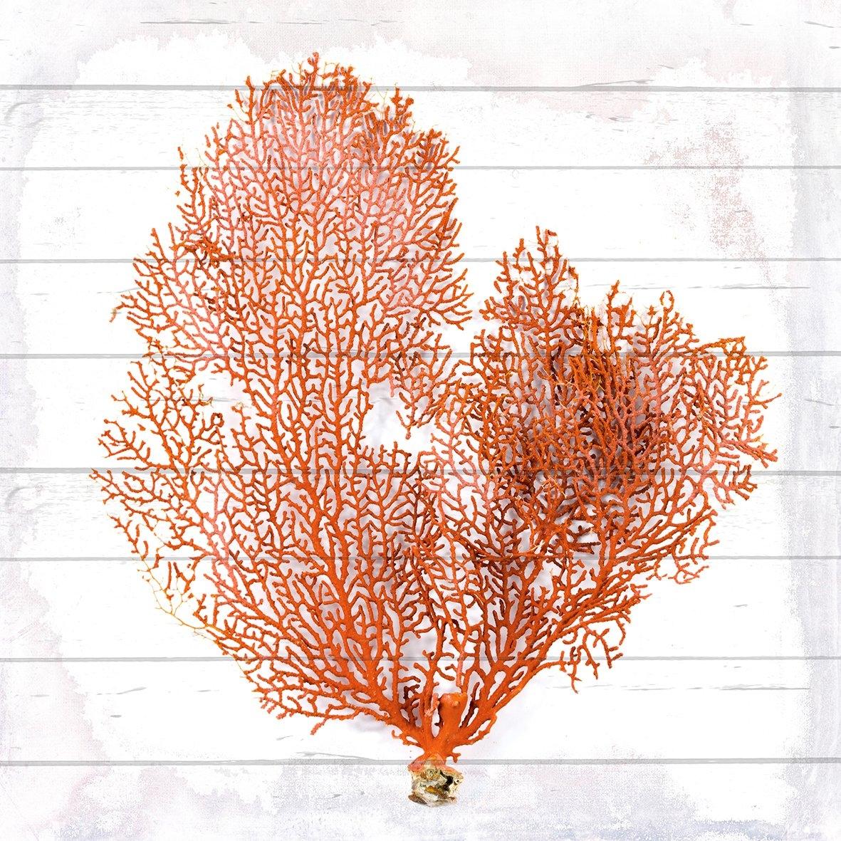 Queence Artprint op hout »Orange Koralle«, 90 x 90 cm, zwart, kwart / circulaire douche nu online bestellen