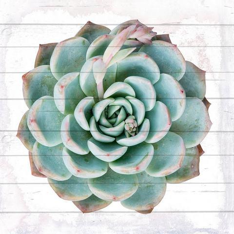 Artprint op hout cactus plant, 40x40 cm echt hout