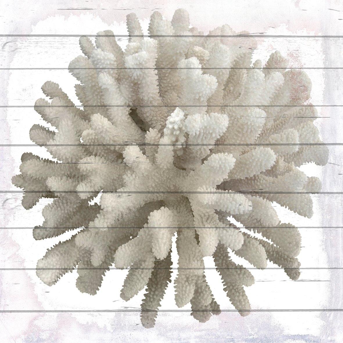 Queence artprint op hout »Weiße Koralle«, 40x40 cm Echtholz bij OTTO online kopen