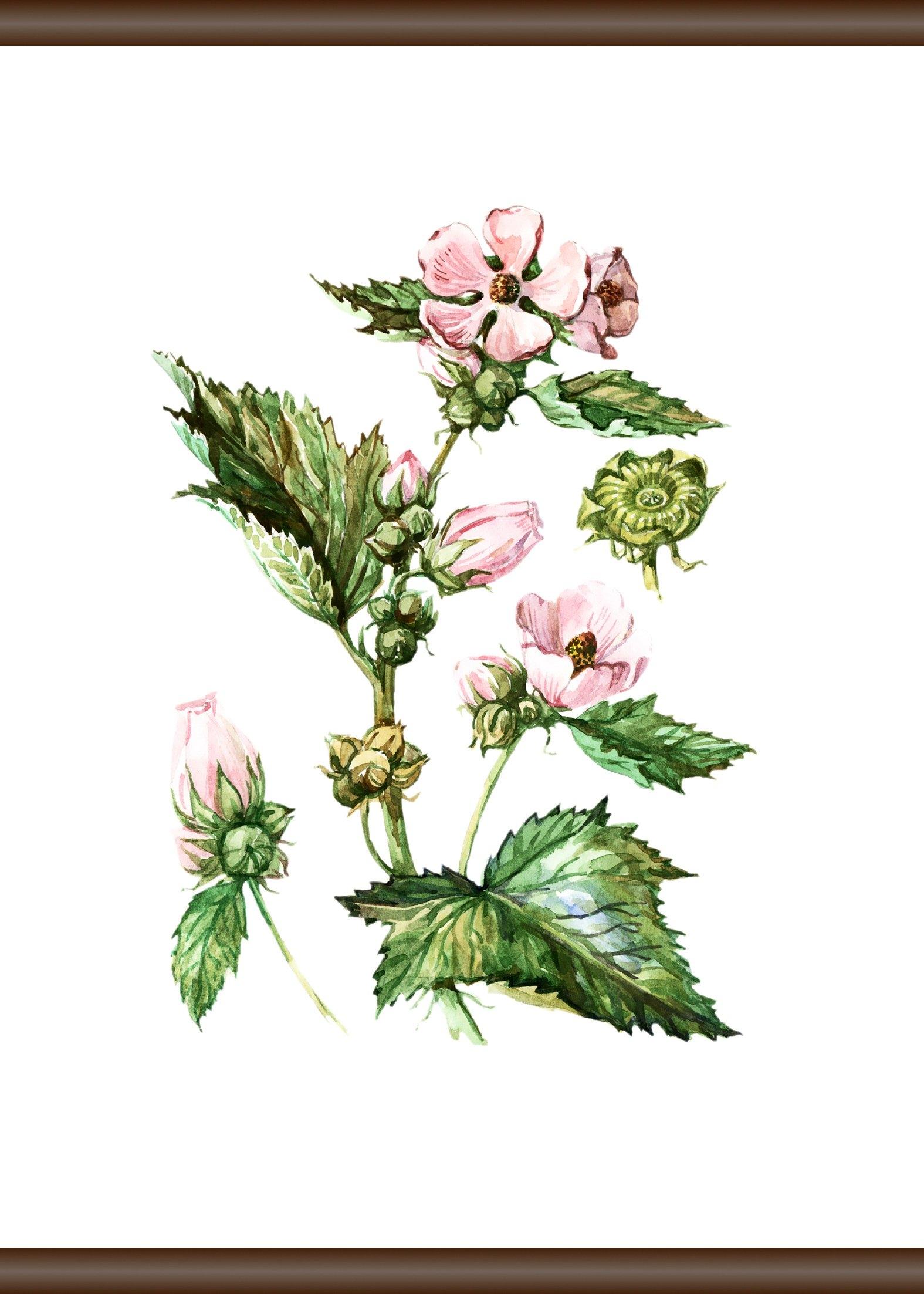queence Wanddecoratie op linnen »Planten anatomie«, artprint op linnen 50x70 cm goedkoop op otto.nl kopen