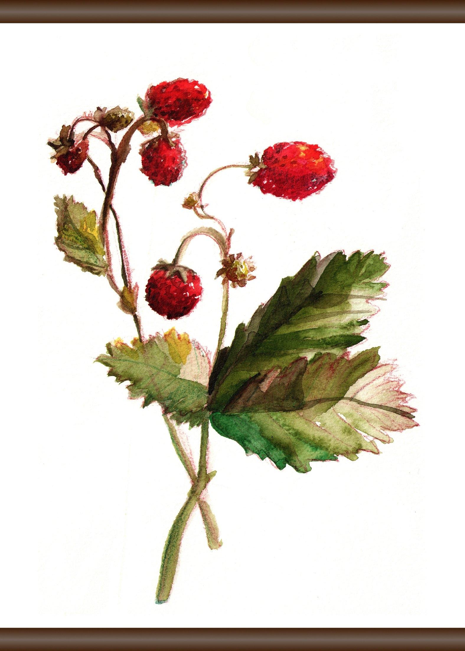 Queence Wanddecoratie op linnen »Aardbeiplant«, artprint op linnen 50x70 cm - gratis ruilen op otto.nl