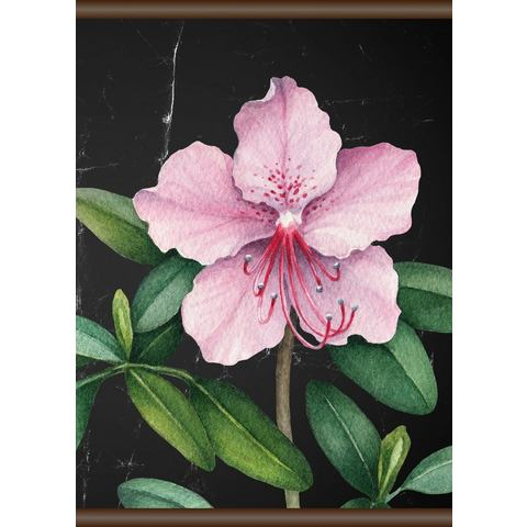 Linnen roze bloem, Screen scroll schilderij 50x70 cm