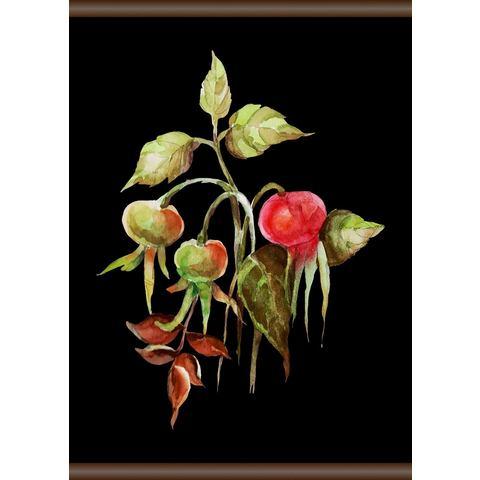Linnen rozenbottel, Screen scroll schilderij 50x70 cm
