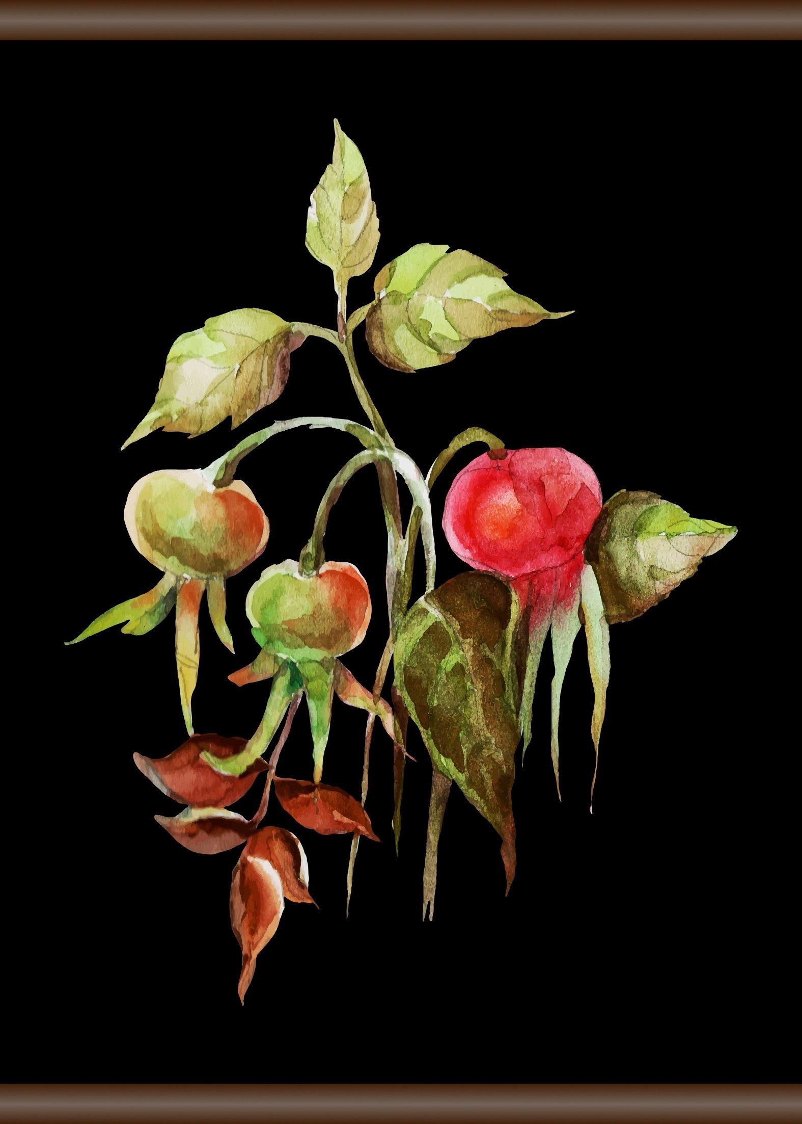 queence Linnen »rozenbottel«, Screen scroll schilderij 50x70 cm - verschillende betaalmethodes