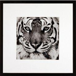 gc wanddecoratie »tiger« zwart