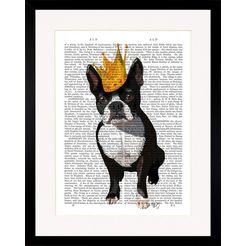gc wanddecoratie »newspaper crown dog i« multicolor