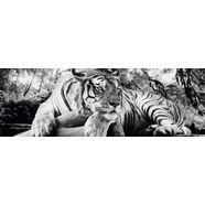 home affaire decoratief paneel »tijger kijkt je aan«, 156x52 cm grijs
