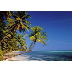papermoon fotobehang »palmenstrand« multicolor
