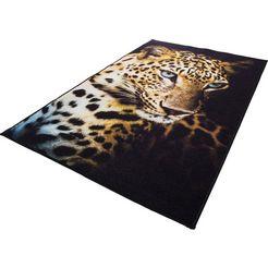 vloerkleed, »leopard«, andiamo, rechthoekig, hoogte 4 mm, machinaal getuft bruin