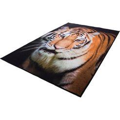 vloerkleed, »tiger«, andiamo, rechthoekig, hoogte 4 mm, machinaal getuft bruin
